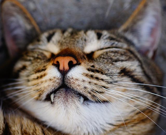 cat-1432066_640