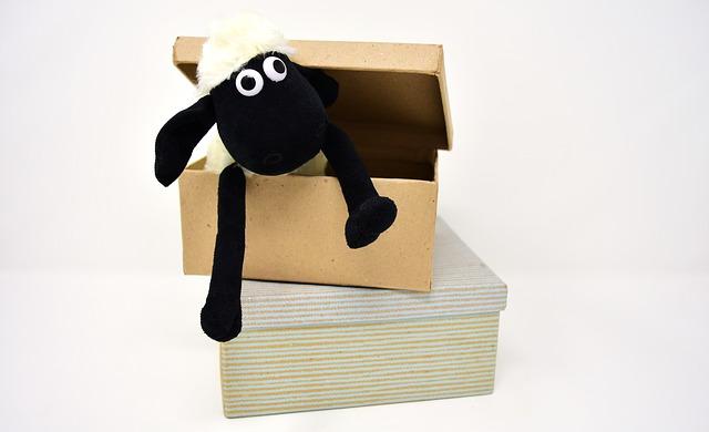 ダンボールと羊