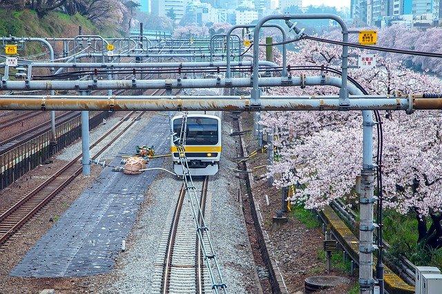 cherry-blossoms-2475101_640